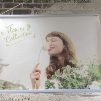 Flower Collection✿